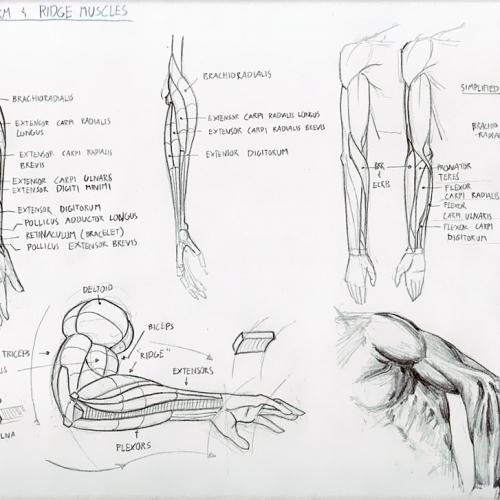 Anatomy Study 020