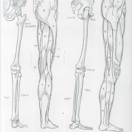 Anatomy Study 024
